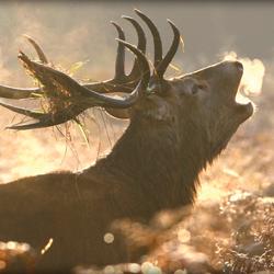 Deer Safari on Exmoor | An Adventure at Dusk