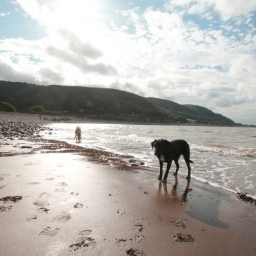 Exmoor Beaches | An Overview