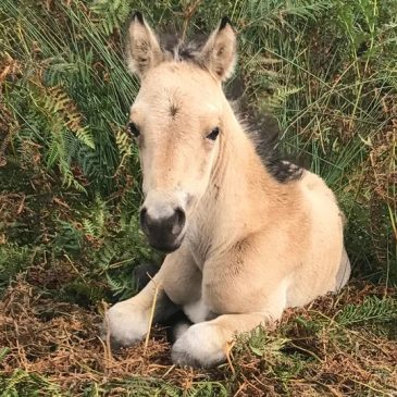 Orphaned Foal Rescue Mission