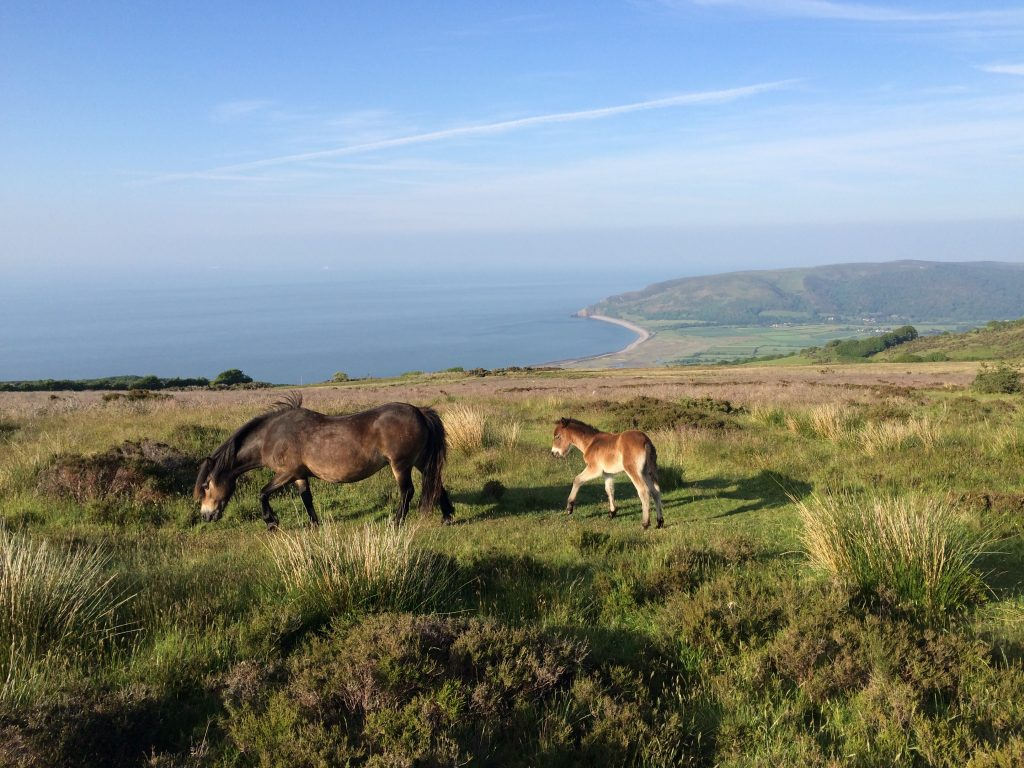 Things to do Exmoor Pony Centre