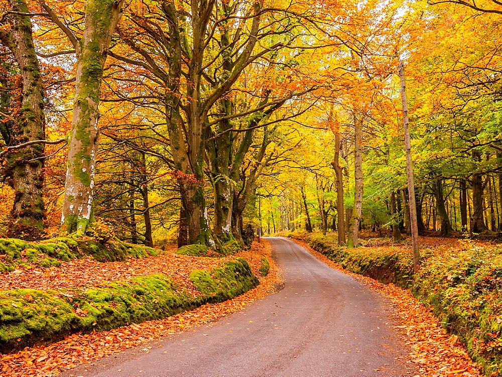 Image result for autumn cottages uk