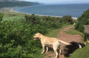 dog-friendly cottages exmoor