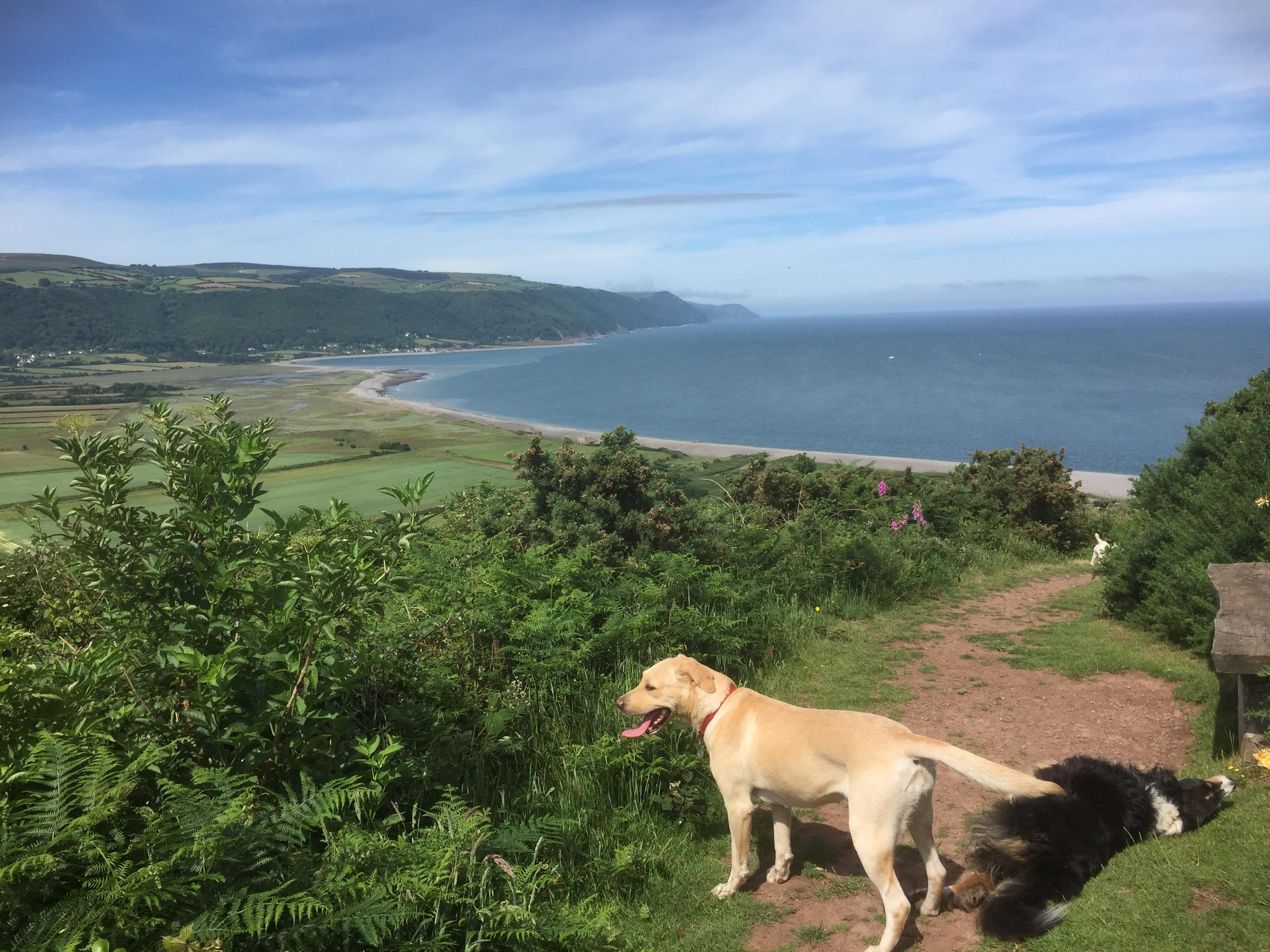 Best Dog Friendly Cottage Uk Breaks