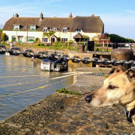 Dog Friendly Cottages on Exmoor (+pubs & beaches)