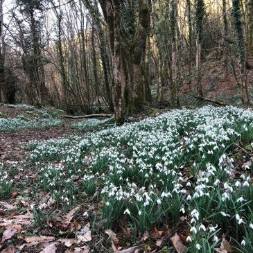 February | Snowdrop Valley
