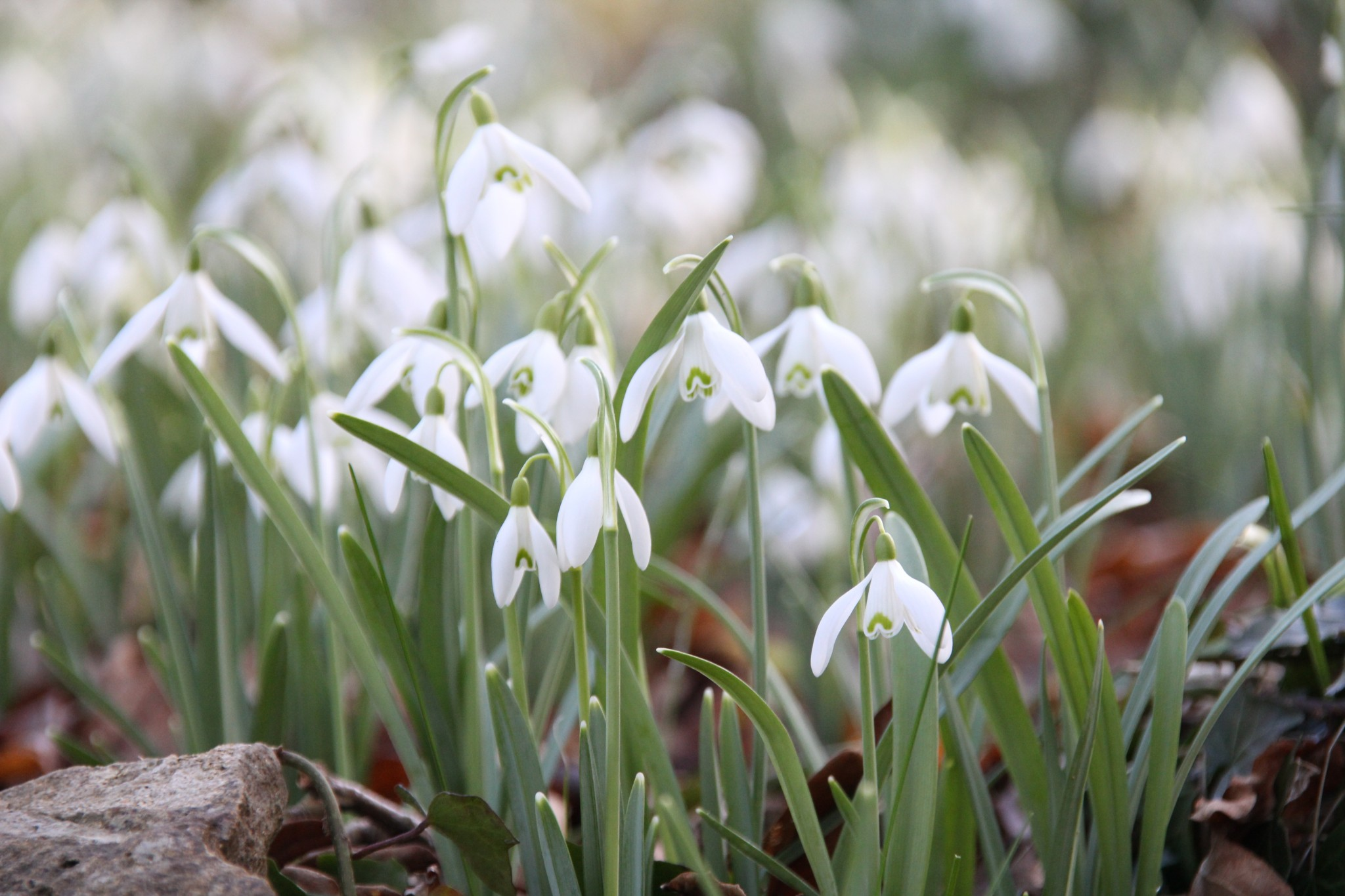 Snowdop Valley Visitor Information The Best Of Exmoor Blog
