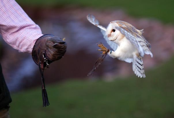 Porlock Owl and Hawk Center