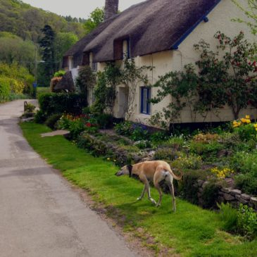 Our Top 10 Luxury Dog Friendly Cottages