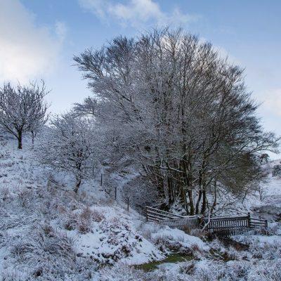 Quiet descends in December
