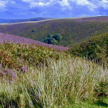 Top 10 Exmoor Walking Spots