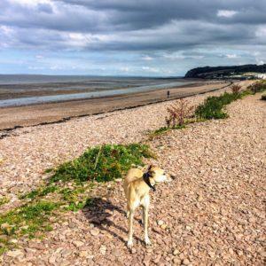 blue anchor beach dog walking