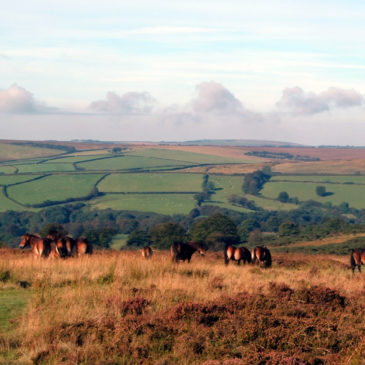 All About the Exmoor Ponies