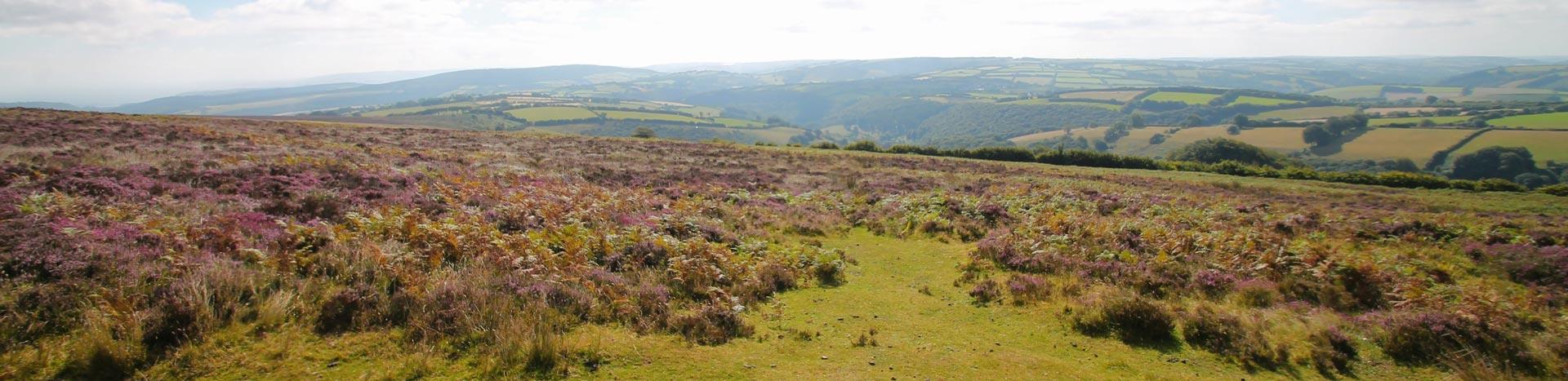 Exmoor moorland