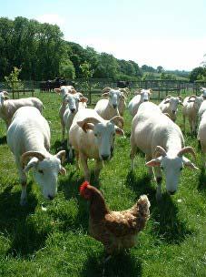 farm and food
