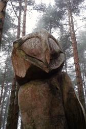 wildlife wood